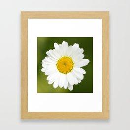 Beautiful Daisy Natural Green Background #decor #society6 #buyart Framed Art Print