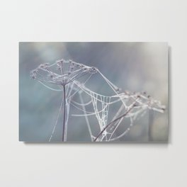Spider web on dried plant, autumn meadow Metal Print