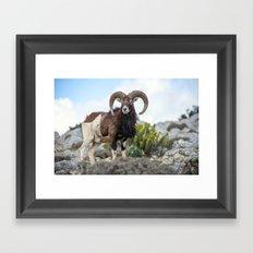 The Mouflon 8152 Framed Art Print