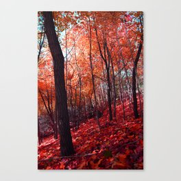 PINK FROST 1 Canvas Print