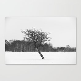 Tree in the winter (RR 273) Canvas Print