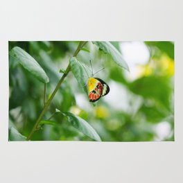 Beautiful Butterfly Rug