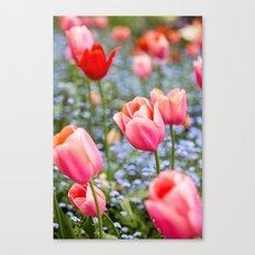Keukenhof Tulips - Amsterdam Canvas Print