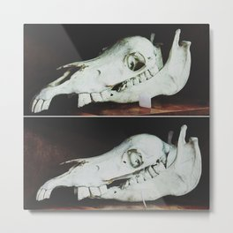 A Friendly Grimace - Cow Skull Antique Metal Print