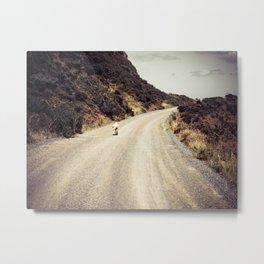 Sheep On A Gravel Road Metal Print