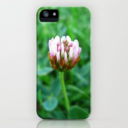 Santa Barbara Clover Blossom 2520 iPhone Case