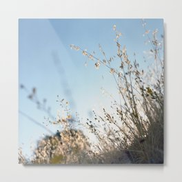 Big Sur, CA. Sunrise over Thicket. Metal Print