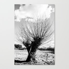 Tree from Hans Christian Andersens nature Canvas Print