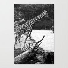 Timeless Giraffe Canvas Print