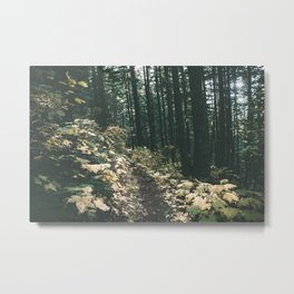 Happy Trails V Metal Print