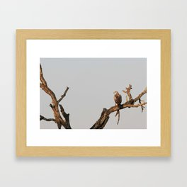 Hawk Eagle with its Catch Framed Art Print