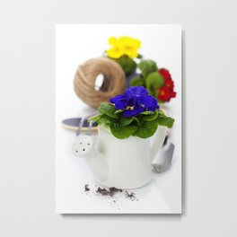 Fresh primulas and garden tools over white Metal Print