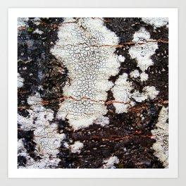 Tree bark naural pattern 2 Art Print