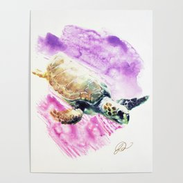 Sea Turtle in Pink and Purple Poster