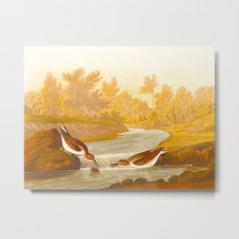 Little Sandpiper Bird Metal Print