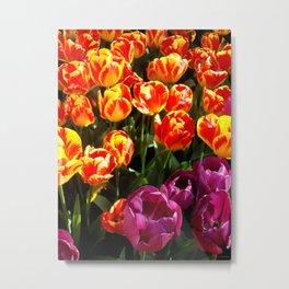 Broken Tulip Blooms Metal Print