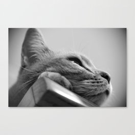 My Cat, Pear-flower on the closet Canvas Print