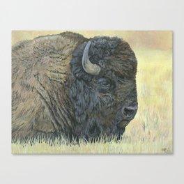 Buffalo Painting, Bison Art, Yellowstone Animal, Western Art Canvas Print