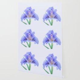 Iris flower Wallpaper