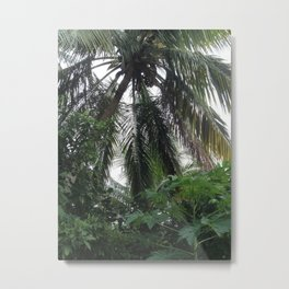 Palm Tree, St. John, USVI Metal Print