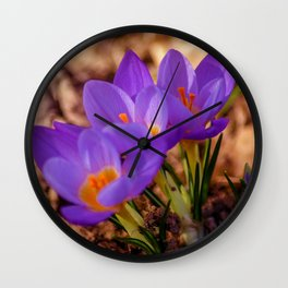 Concept nature : Crocus etruscus in silva Wall Clock