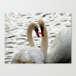 White Swans In Courtship Canvas Print