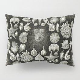 Ernst Haeckel - Thalamphora (Seashells) Pillow Sham