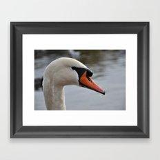 Swan portrait Framed Art Print