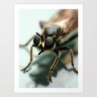 Robber fly Art Print