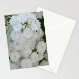 Deutzia Pure and Simple Stationery Cards