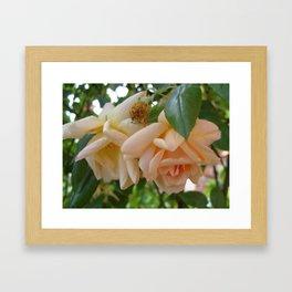 Roses 1 Framed Art Print