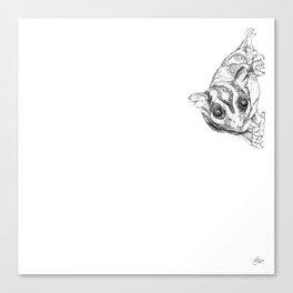 A Sketch :: A Sugar Glider Named Loki Canvas Print