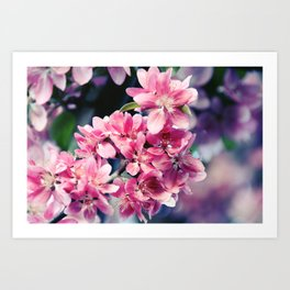 Crabapple Blooms Art Print