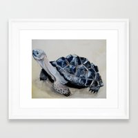 tortoise Framed Art Prints featuring Tortoise by Brooks Cavender
