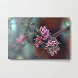 Sedum Stonecrop Flowers Metal Print