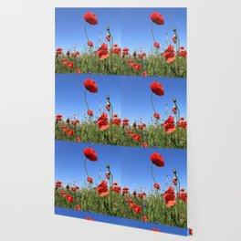 poppy flower no15 Wallpaper