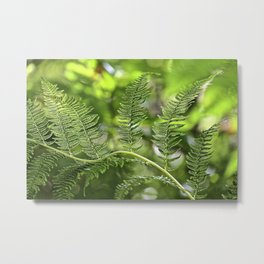 The Lively Ferns Metal Print