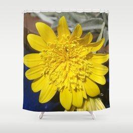 Yellow Gazanias Shower Curtain