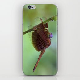 Macro photograph of a Dragonfly on a Leaf iPhone Skin