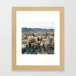 Cholla Cactus Garden in Joshua Tree National Park Framed Art Print