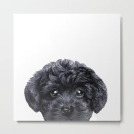 Black toy poodle Dog illustration original painting print Metal Print