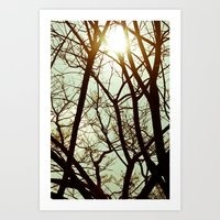 Morning Trees Art Print