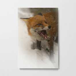 Wild Red Fox In The Snow Metal Print