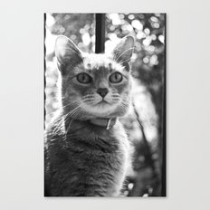 Le chat Canvas Print