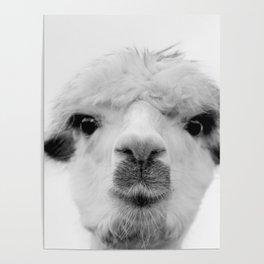 Anastasia Alpaca Poster