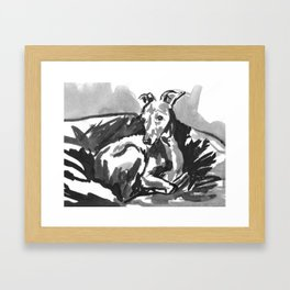 Greyhound -4 Framed Art Print