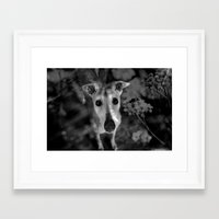greyhound Framed Art Prints featuring greyhound by Lucie B