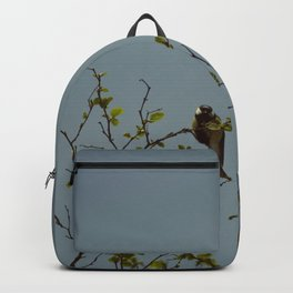 Great tit on a branch Backpack