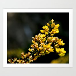 wild yellow Art Print