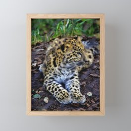 Endangered Amur Leopard Cub by Reay of Light Framed Mini Art Print